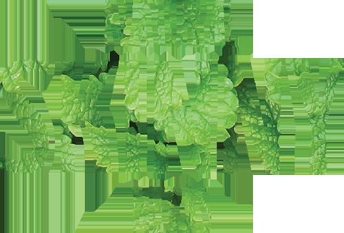 Natural Skinny Herbs arbata